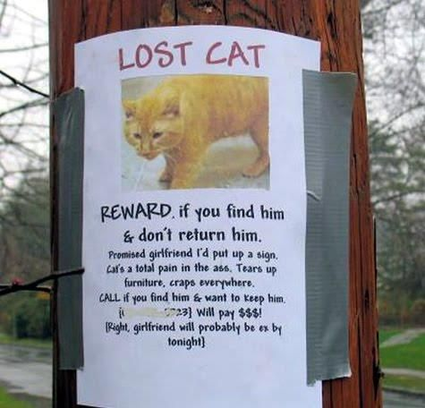 lost cat flyer you can keep it girlfriend will be ex too please call funny animal pictures with captions very funny cats cute kitty cat wild