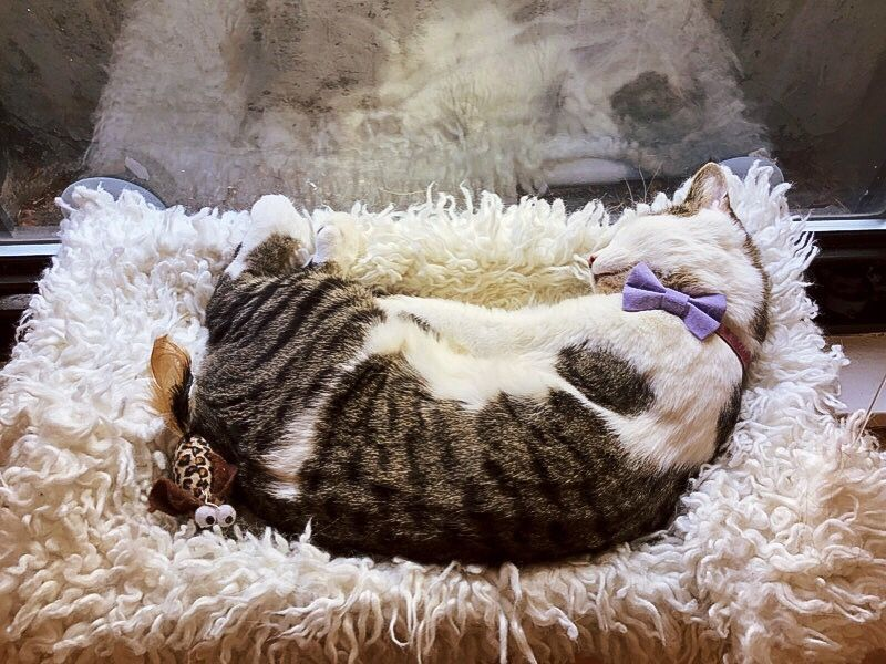 Turning 24 Neko cat, Cat cafe, Turn ons