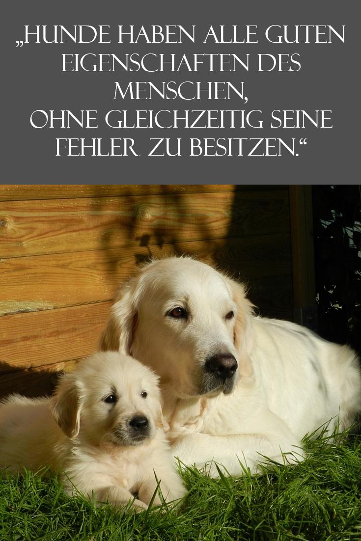 tier sprüche zum nachdenken Ein Spruch zum Nachdenken! | Hundesprüche tier sprüche zum nachdenken