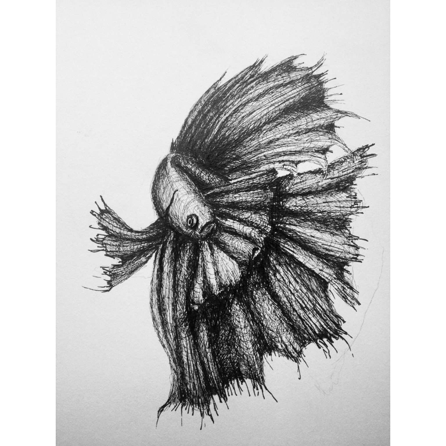 By Paige kilbourne pen drawing art drawing betta fish