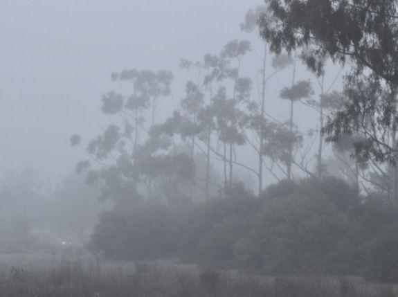 Perth bushland park, early morning fog, nature, debiriley.com