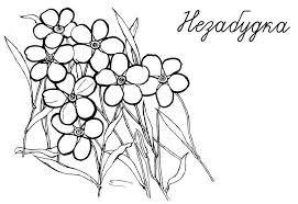 Картинки по запросу фото незабудки цветка   Geometric ...