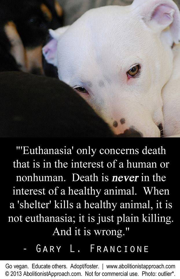 Any Animal Shelter Can Only Cease Euthanasia If The Community It