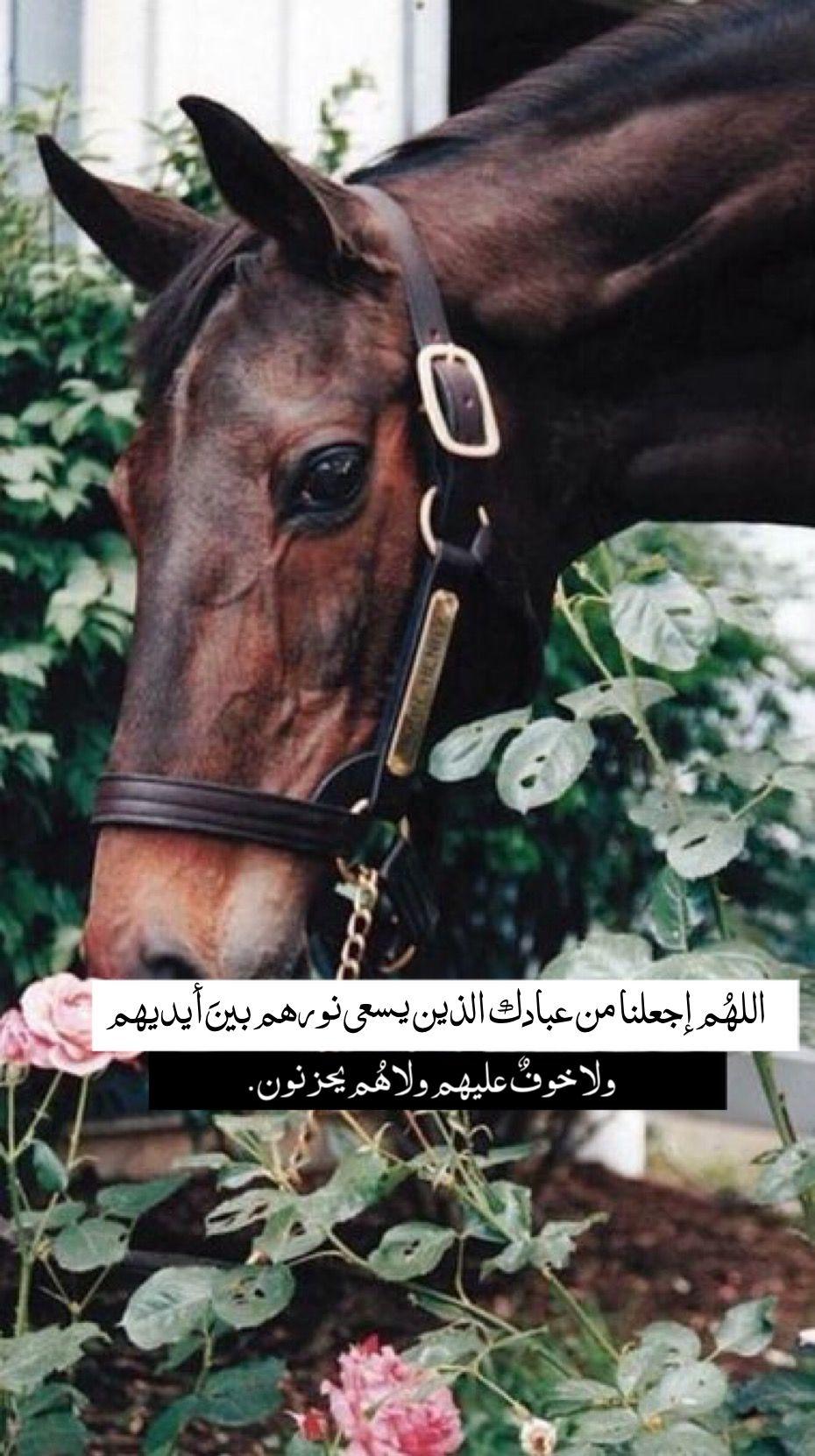 Pin By الوتين On خلفيات دينية Horses Animals Instagram