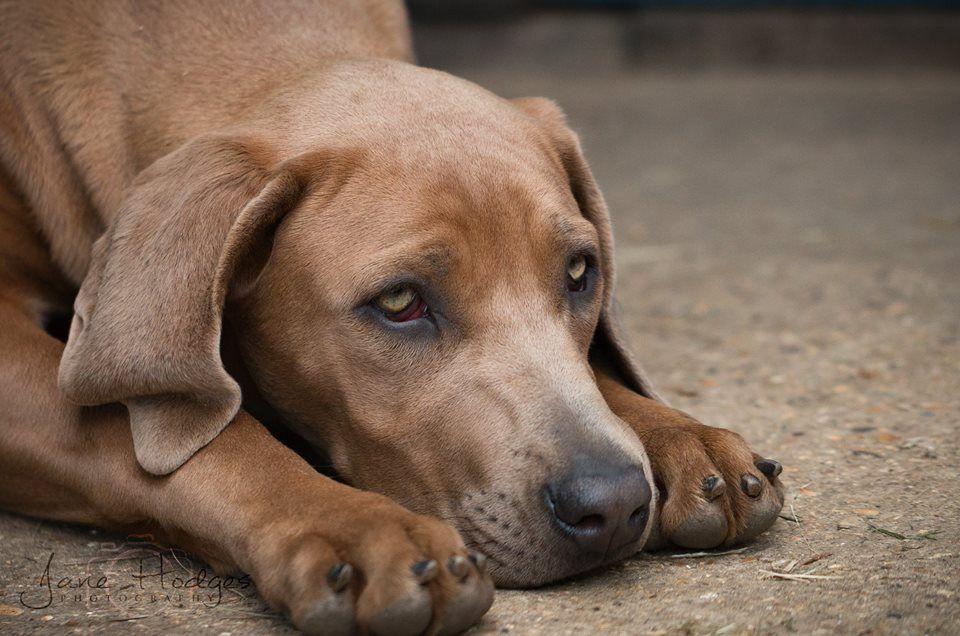 Jane Hodges Pet Photography Godalming Surrey Pet Photographer