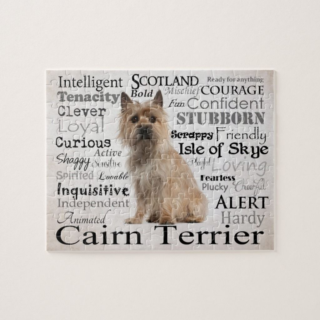 Cairn Terrier Traits Puzzle Cairn Terrier Terrier Terrier Dogs
