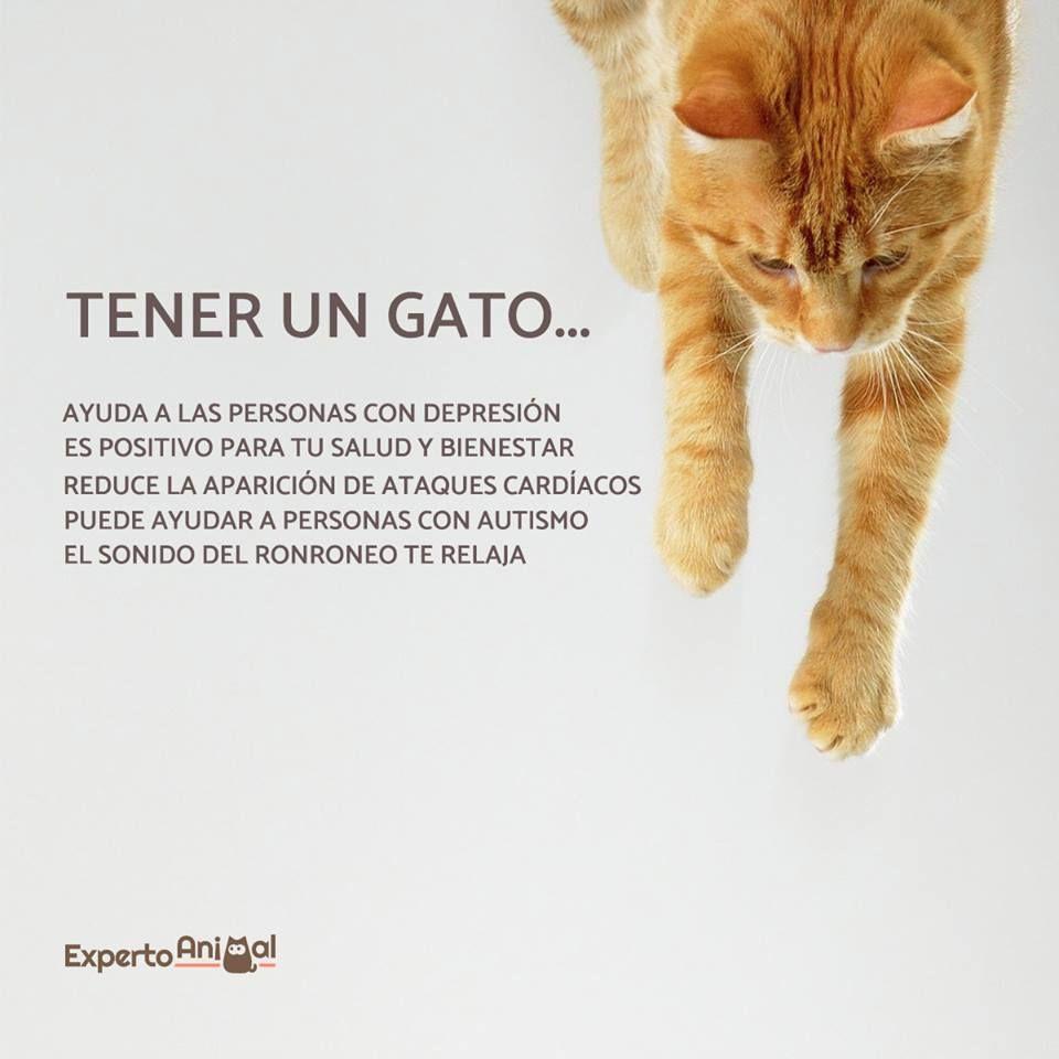 Estos Son Solo Algunos De Los Muchos Beneficios De Vivir Con Un Gato Te Animas A Adoptar A Uno Infografia Lenguaje De Los Gatos Gatos Gatos Y Perros Lindos