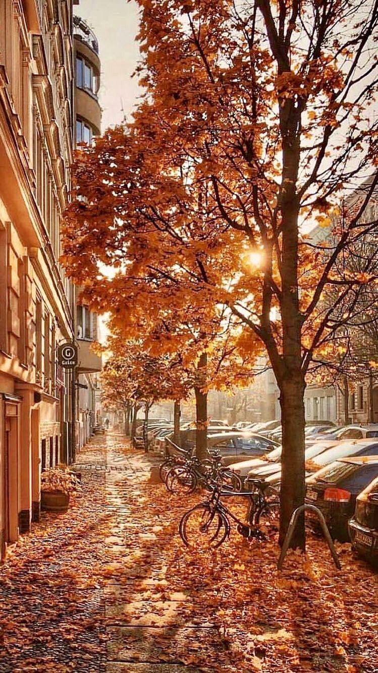 Pin By Cynthiaanna On It S Fall Y All Autumn Scenery Autumn