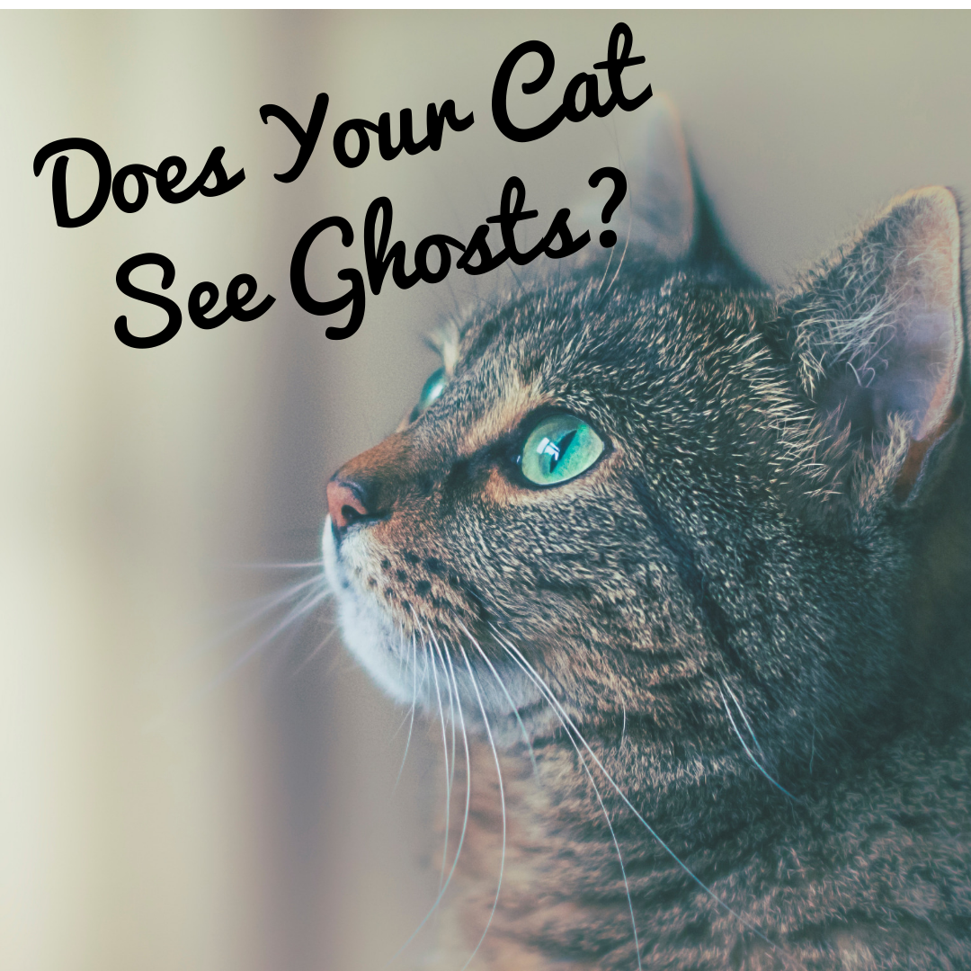 Do Cats See Ghosts? Why Your Cat Can See Spirits Cats