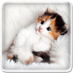 Pin By Khaeruddin Alfatih On Apk Fun Cute Animals Live Wallpapers