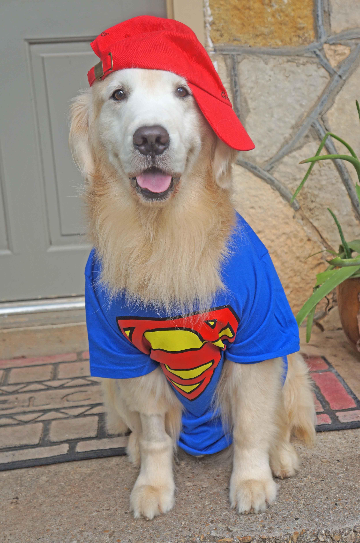 My Super Hero Jack Golden Retriever Mom Beautiful Dog Breeds