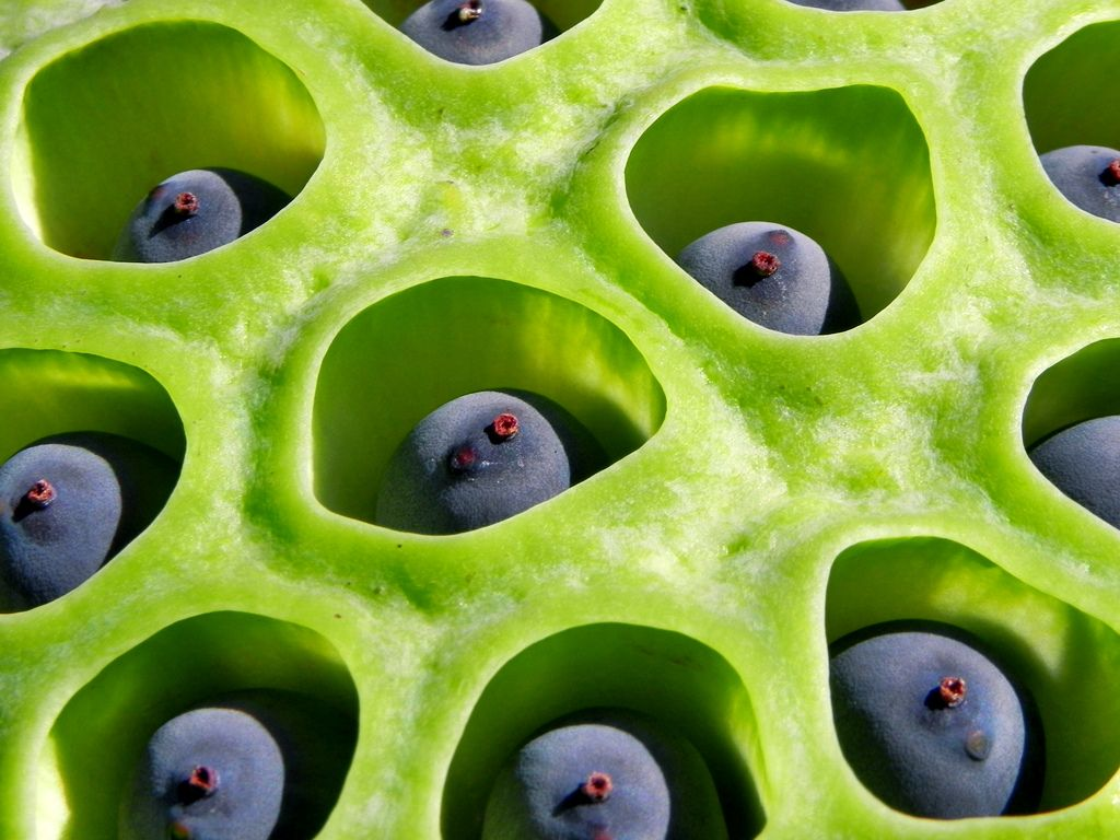 Alien Pods Tumbler Aliens And Seeds