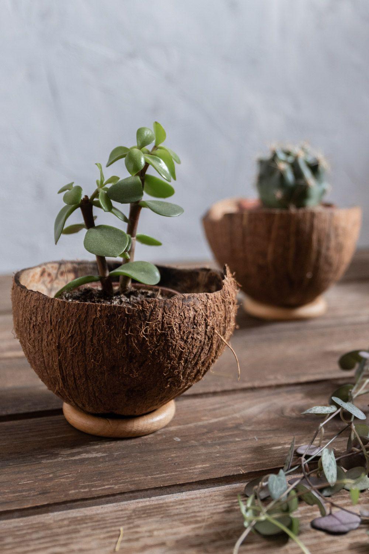 DIY • Übertopf selber machen – Upcycling aus einer Kokosnuss