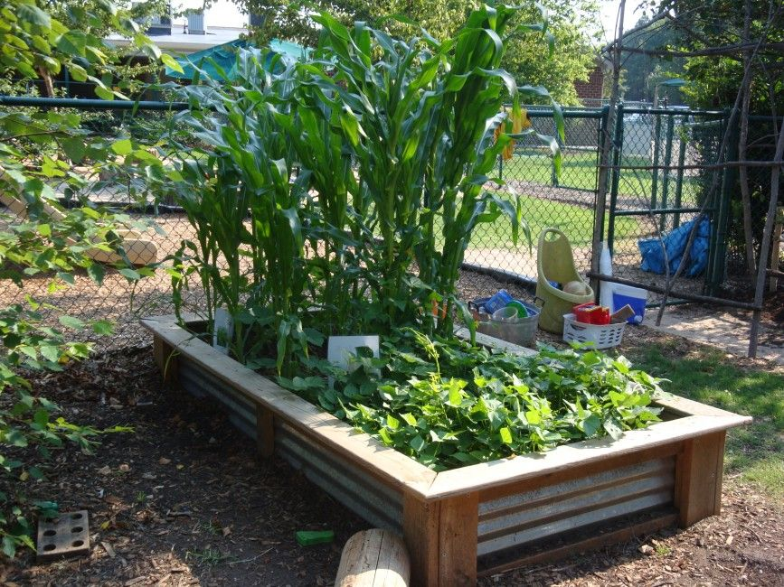 ideas pallets raised garden beds growing while keeping birds squirrels growing vegetables in boxes raised garden beds make gardening easier and more