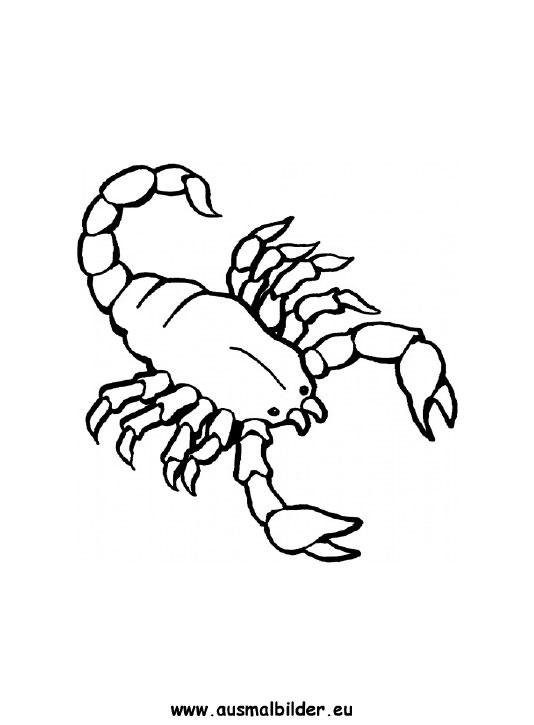 Malvorlagen Des Skorpions Ausmalbilder Skorpion Skorpione Malvorlagen Vorlagen Okay Gesture