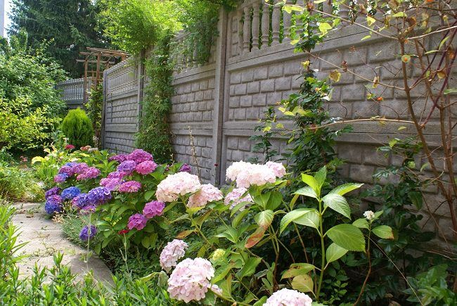 Landscaping With Hydrangeas With Images Hydrangea Landscaping Landscape Design Hydrangea Garden