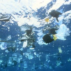 """Including a new word to despise, """"plastisphere."""" Disease-Bearing Invaders Cruise on Ocean Trash : DNews"""
