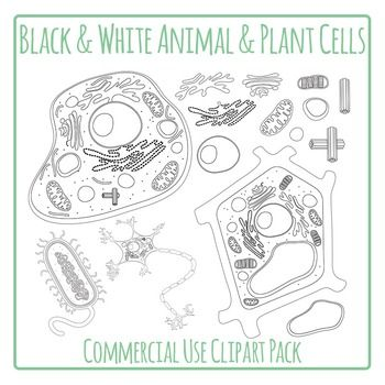 Cells Plant And Animal Cells Diagrams In Black And White Commercial Use In 2021 Plant And Animal Cells Cell Diagram Black And White