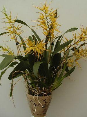 Разновидности орхидеи фото и названия