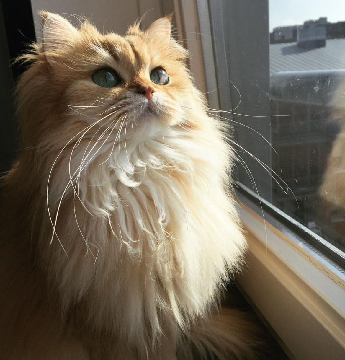 ᵛᴬᴿᵀᴬᴾ Pretty cats, Cute cats, Fluffy cat