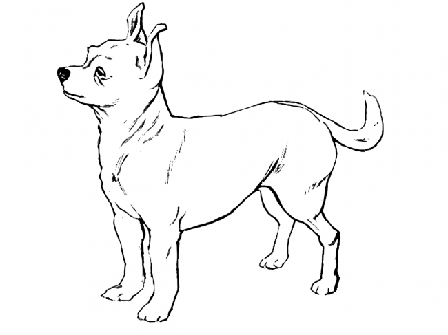 Chihuahua Coloring Pages Bing Images Horse Coloring Pages Dog Coloring Page Animal Coloring Pages