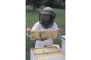 Grants for beginning beekeepers student centered resources honey bees and raising - Beekeeping beginners small business ...