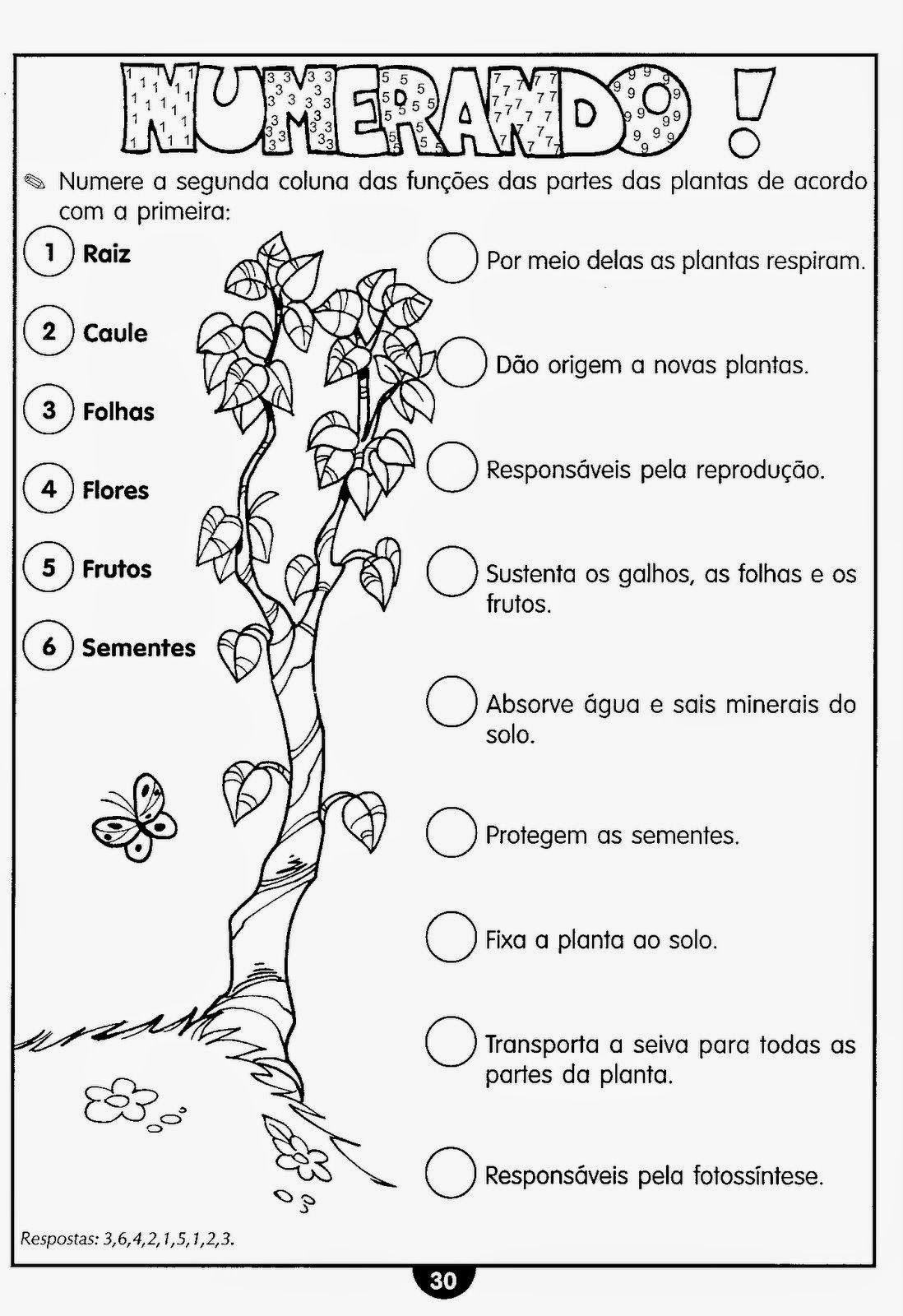 Atividades De Ciencias Plantas Fotossintese Ciclo Da Agua