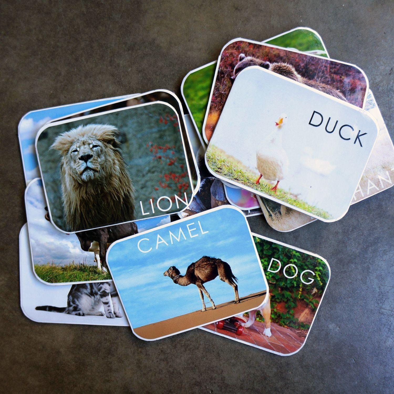 DIY: animal flashcards | Animal flashcards