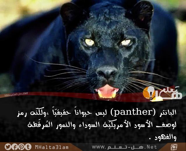 معلومات عامة عن الحيوانات هل تعلم Animal Facts Animals Panther