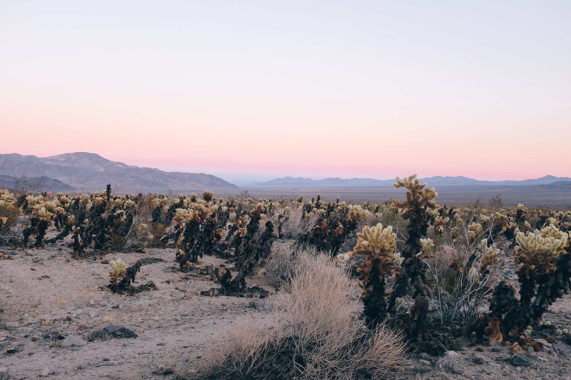 flexa early dew lak : A Day In Joshua Tree That We Would Be Happy To Live Over And Over