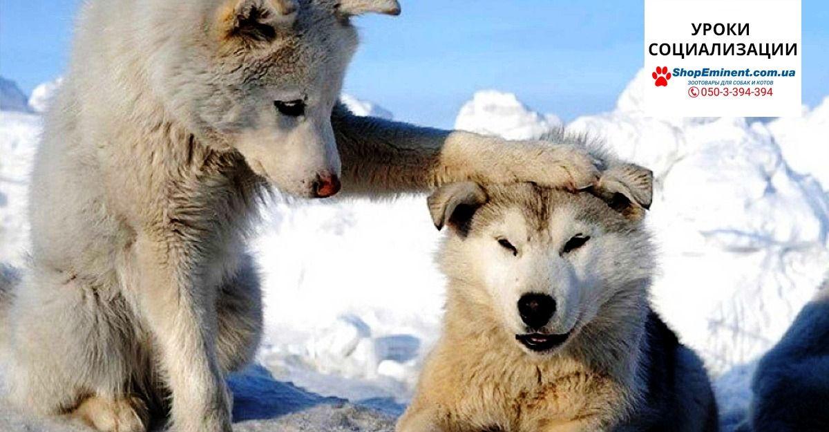 Уроки социализации | Смешные фотографии животных, Фото ...