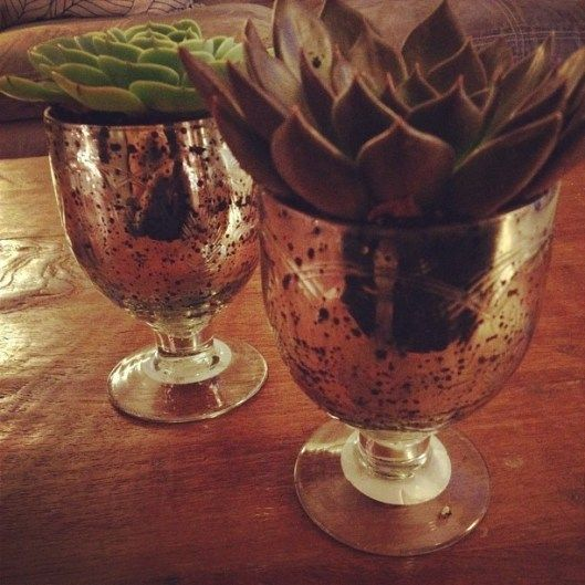 Succulents in decorative cups