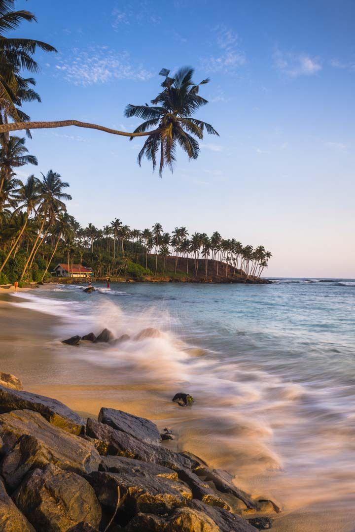 palm tree landscape photography mirissa beach south coast of sri