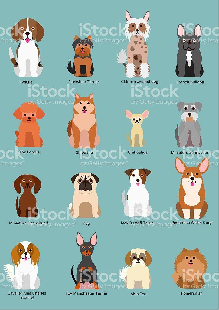 Cute Sitting Small Dog Breed Dog Breeds Dog Illustration Small Dog Breeds