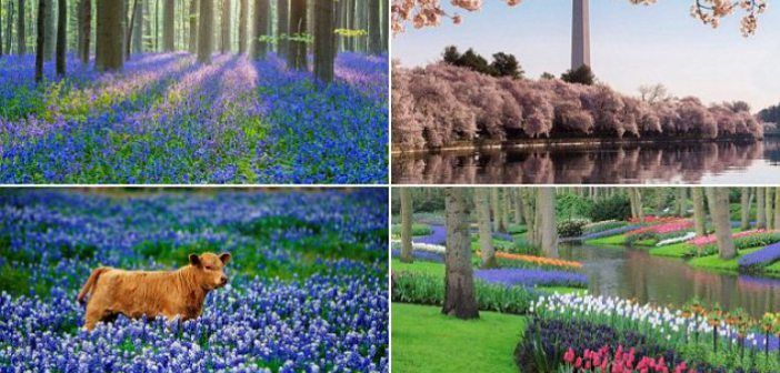 Top 15 Most Beautiful Flower Garden In The World