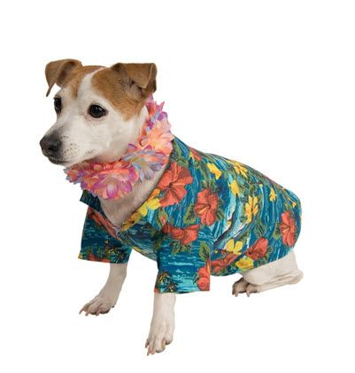 Pet Hawaiian Costume Pet Costumes Dog Halloween Costumes Best