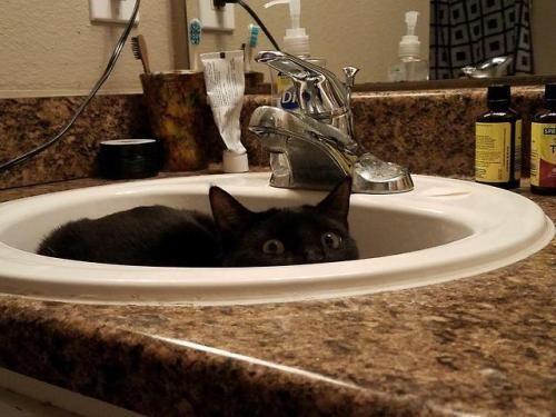 "My friends ""sink goblin"". Kittens cutest, Animals"