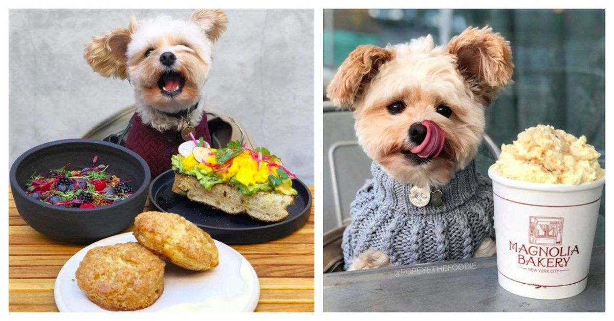 Stray Dog Is Now A Foodie That Dines At Pet Friendly Restaurants