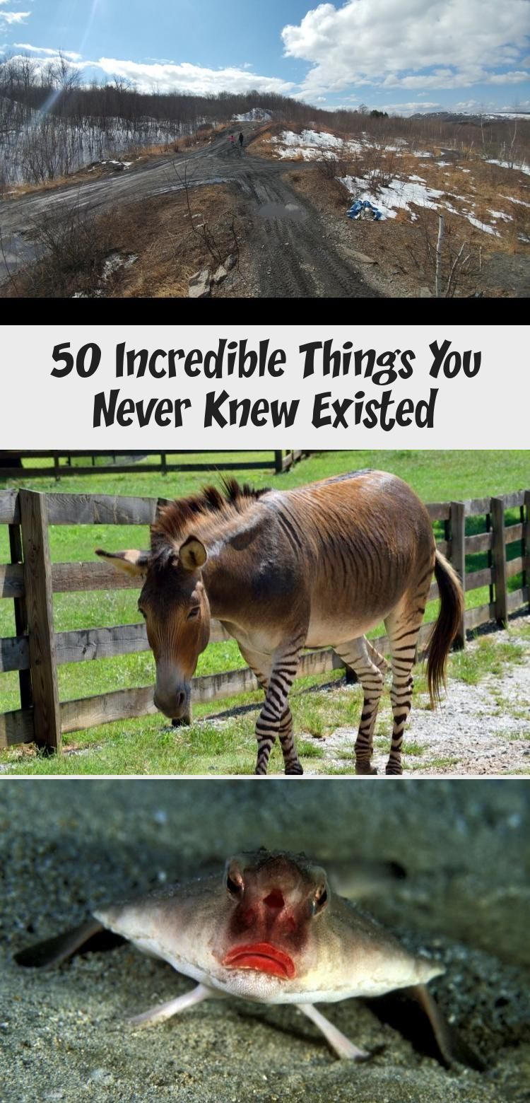 50 Incredible Things You Never Knew Existed In 2020 The