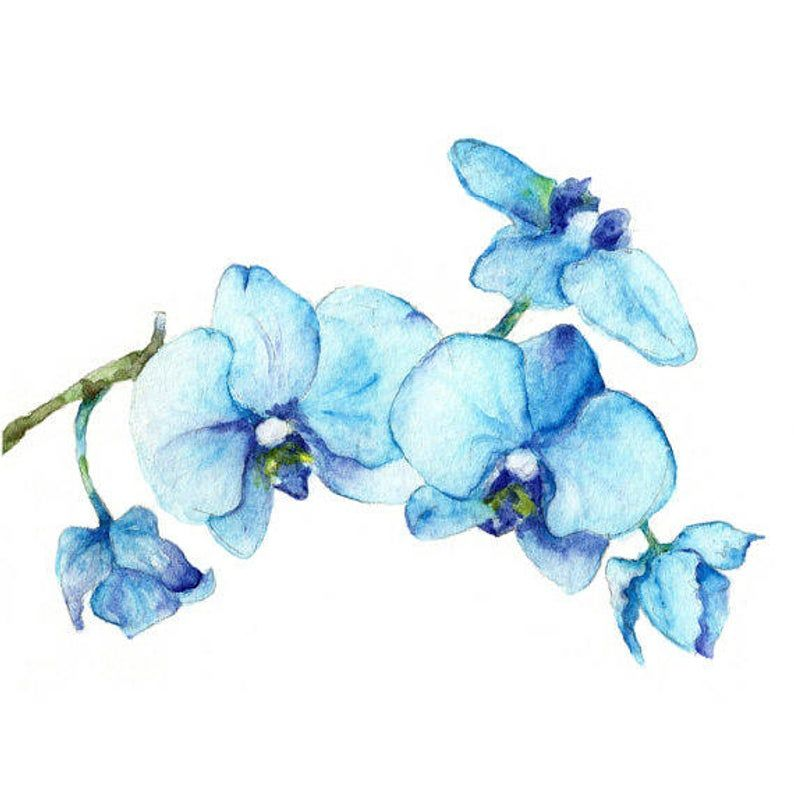 Watercolor Blue Orchid Art Print Set Of 2 Art Prints Of Image 1