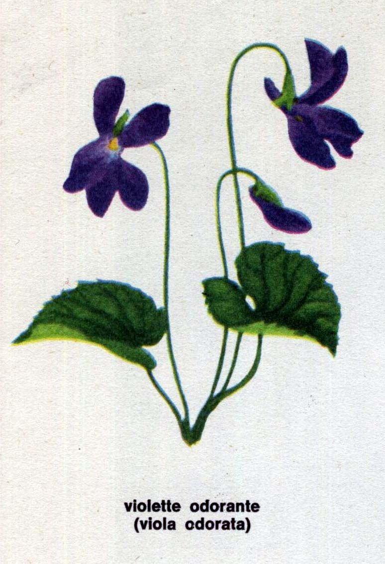 Img dessins de fleurs violette projet - Image fleur violette ...