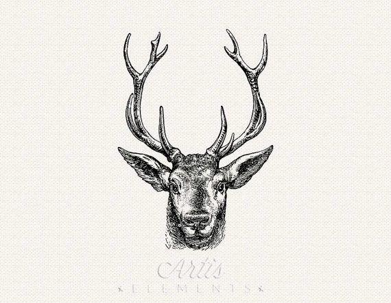 Stag Buck Elk Deer Head With Antlers Pdf Png Digital Clipart Download Transparent Background Vintage Art Prints Stag Deer