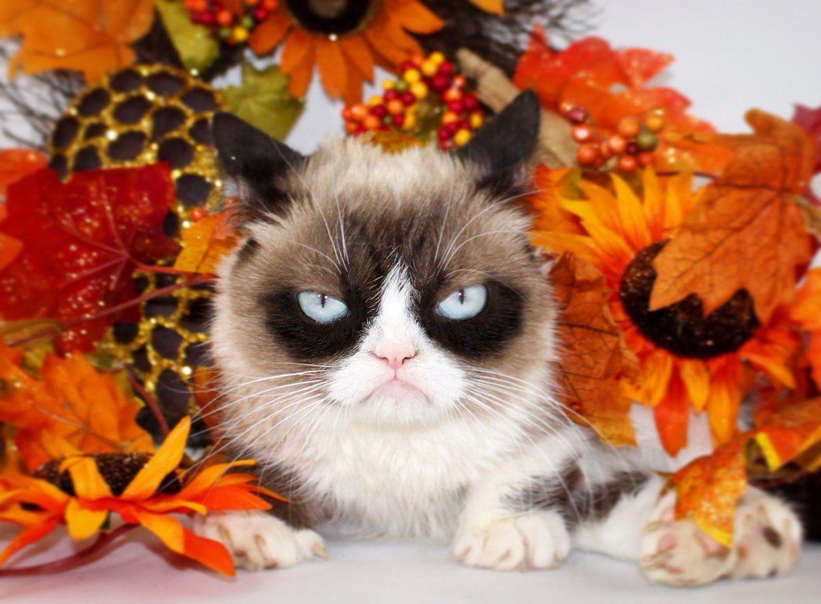 Grumpy Cat   Grumpy cat, Grumpy cat quotes, Pet holiday