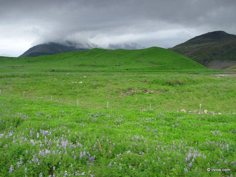 Fresh Green of Iceland.