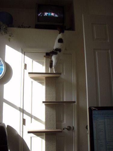 Over The Door Cat Tree Gotta Love It Smartcat Multi Level Climber Pet Supplies Rrrcattreeplans