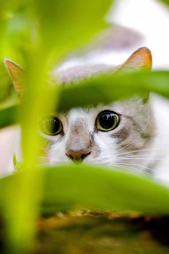Hiding Behind These Plants Cute Cats Pretty Cats Cat Wallpaper Cat wallpaper hd 1366x768