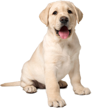 Find Puppies And Dogs For Sale Near Me In India By Means Of Only4pets The 1 Free Pet Site To Purchase Sell And Rehome Pupp Cutest Cats Ever Dog Person Dogs