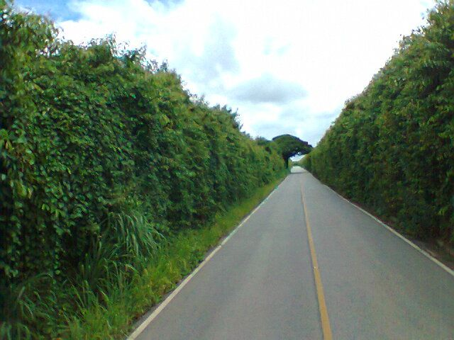 Estrada municipal (Capela do Alto-Iperó-SP)