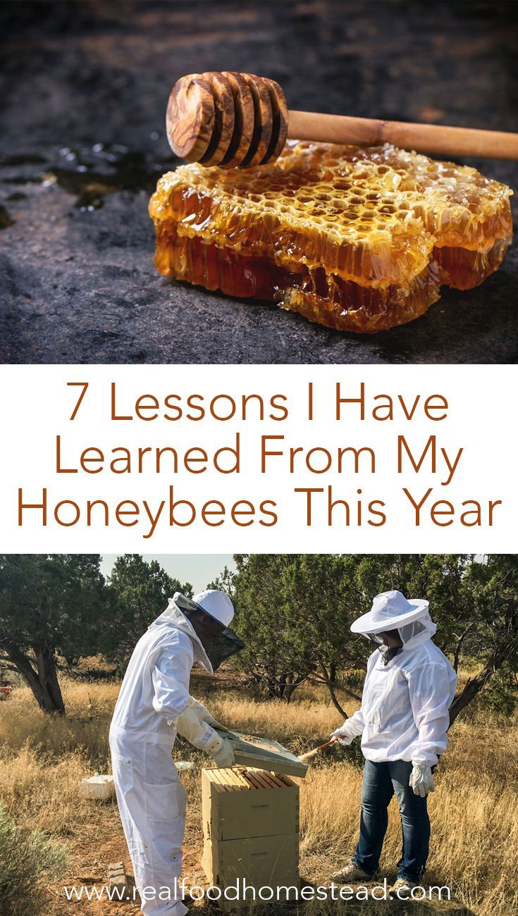7 Lessons I Have Learned From My Honeybees This Year | Bee ...