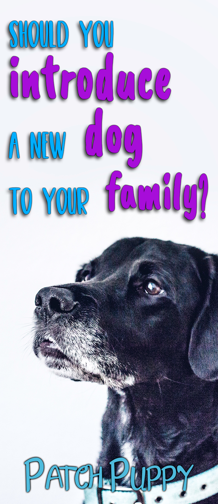 how to introduce a new dog to your old dog